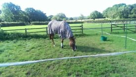 Looking for sole use yard for two horses