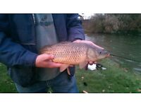 FRESH WATER FISHING IN THE HEART OF KENT. LOVELY QUIET, CLEAN WELL KEPT SITE. £7.00 A DAY