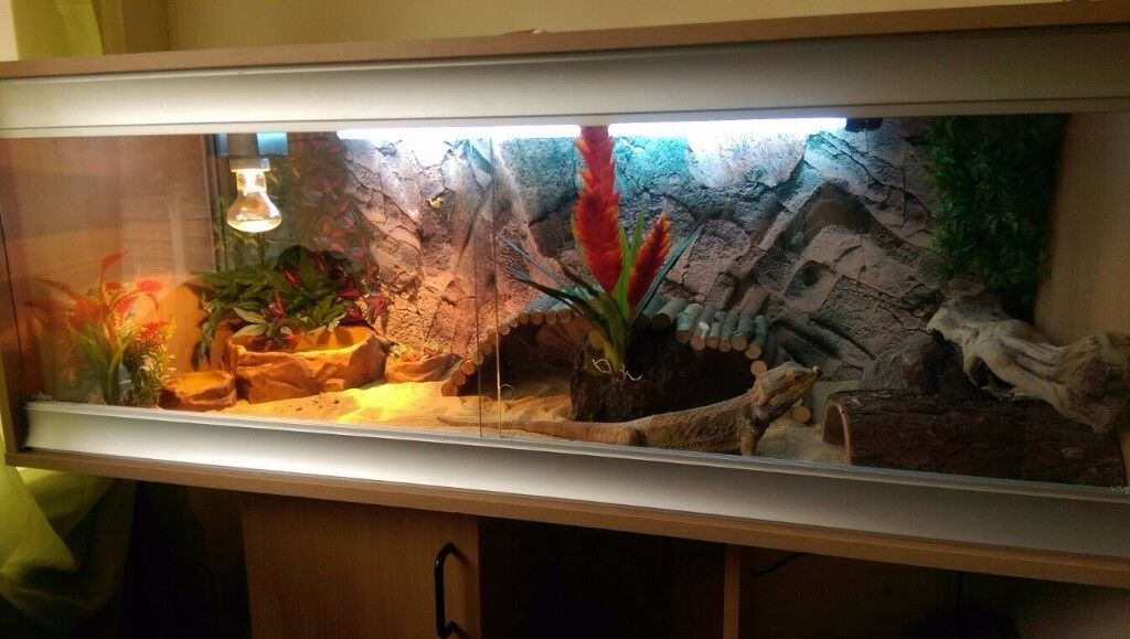 large vivarium set up, with all accessories, fixtures & fittings needed all stand (slightly smaller)