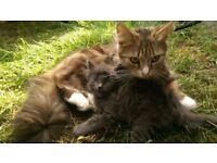 Lovely kittens 3 boys