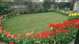 Garden of Morning Dew
