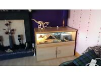 Custom built display vivarium and cabinet