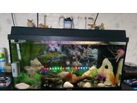 Tropical fish tank with accessories + fish!