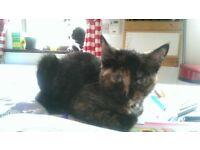 18 week old kitten needing a new home!!