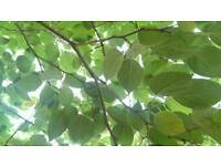 Gardening and Tree Services