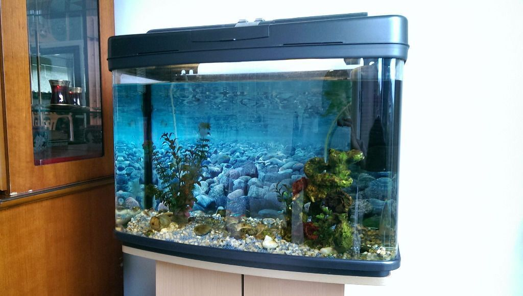Fish tank with stand heater filter air pump etc in for Fish tank air filter