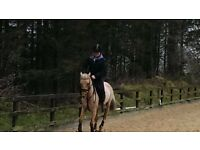 Exceptional 13.2HH Pony - Ideal For Pony Club Events & Show Jumping (>1.10M)
