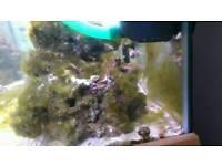 Marine snails and shrimps