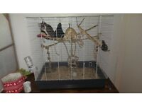 FREE - 3 adult male rats (brothers) an a large cage with various toys
