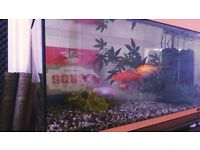 Aquarium / Fishtank and all the accessories! *Reduced***Bargin - Quick sale for Christmas