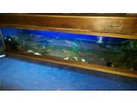 6' fishtank (URGENT)