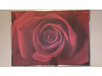 """Large picture """"Rose"""" with silver brushed steel frame"""