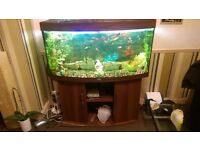 4ft fish bow front fish tank with fish