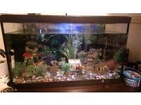 Large fish tank full set