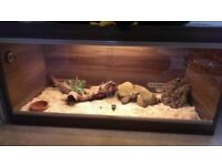 Vivarium and Snake