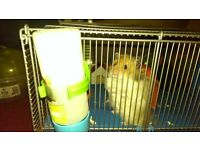 free Hamster , cage n hamster playing ball