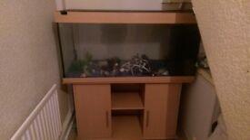 Fish Tank & Cabinet