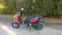 BRAND NEW BENELLI 49x SCOOTERS