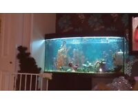 Juwel Aquaruim Fish Tank and approx 30 fish