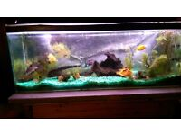 Large tropical aquarium, complete with 7 beautiful healty fish and all accsessories.
