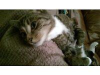 Lost cat (monty)