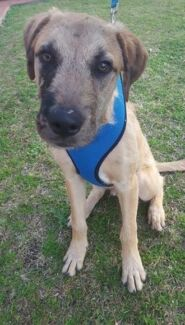 Zephyr is looking for his forever home. Taree Greater Taree Area Preview