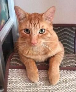 KLAWS: Rusty, missing Orchard Park Rd in Lindsay 2 y/o neutered