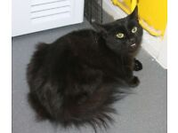 looking 2 rehome my loveley female cat