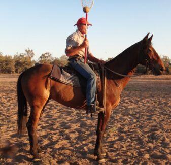 ASH polocrosse/campdrafting horse for SALE Dirranbandi Balonne Area Preview