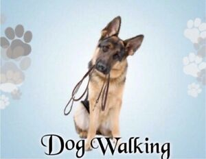 Reliable Dog Walking Services - Ingersoll