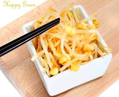 Soybean Sprouts - Sprouting seeds - SOYBEAN  Sprouts seeds 20 GRAMS