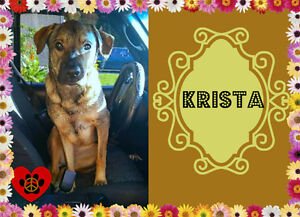 I'M KRISTA I NEED A LOVING FOSTER/FOREVER HOME