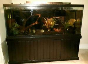 Aquarium - 180 Gallon  with stand