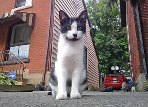 Lost Male B/W Cat. Hess & Napier - Fixed, Chipped & Ear Clipped