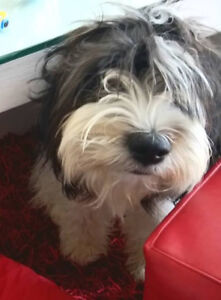 Accommodation wanted, family of 3 with a small dog