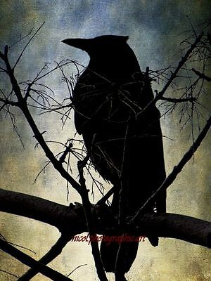 Rustic Black Bird Crow Silhouette Home Decor Bedroom Art Matted Picture USA A561 ()