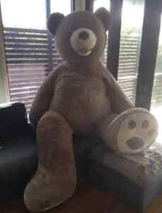 Giant Costco Teddy Bear, (93 inch/ 236cm) Twin Waters Maroochydore Area Preview