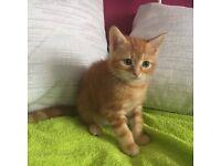 ERGENT HOME NEEDED FOR KITTEN......
