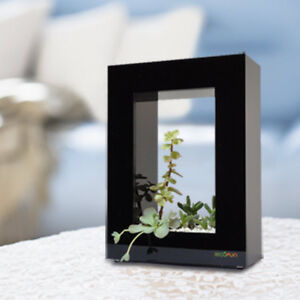 PORTRAIT FLOWER PANT POT FRAME | PERFECT FOR OFFICE / HOME