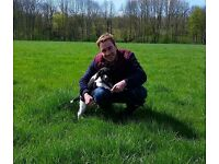 Experienced Professional Dog Walking / £10p hour / Free Pick-up/Drop off / Fully Insured