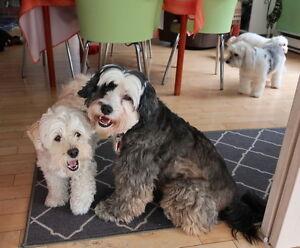 Pension pour chiens de petites races et pour chats à St-Sauveur Laurentides Québec image 4