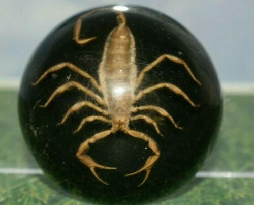 Vintage Large Scorpion in Lucite Acrylic by Maack