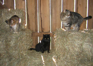 Looking for barn/farm cats.