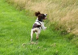 DOG WALKER / PET SITTER Hinckley & bosworth area.