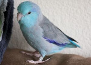 Loving forever home for your feathered friends!