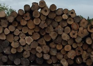 Dry firewood for sale. Full cords