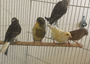 Show quality Canaries