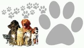 Dog Sitter Care N Cuddles