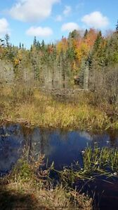 520 acres west of Sault Ste Marie, long view on Lake Superior
