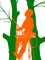 Tree removal 647*704*0175 same day service $100.